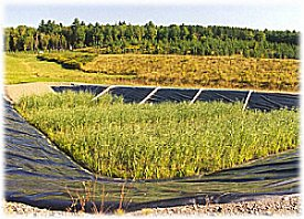 Reedbed Technology